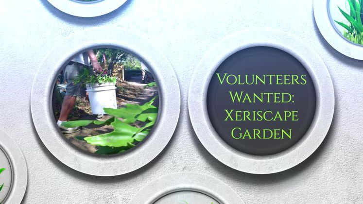 Xeriscape Volunteers