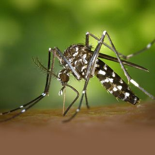 City's Vector Control Unit Working to Combat Mosquitoes