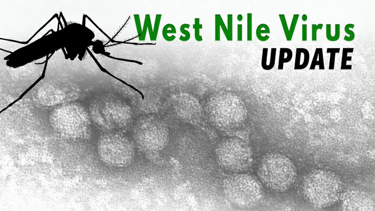 West Nile Virus Graphic
