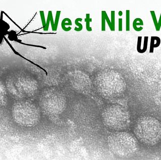 Five Mosquitos Test Positive for West Nile Virus