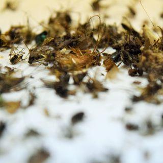 Fue detectado virus del Nilo Occidental en Mosquito en la calle Main Drive.