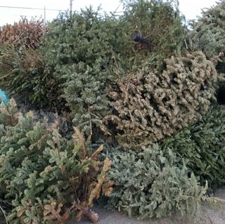 2017 Christmas Tree Recycling