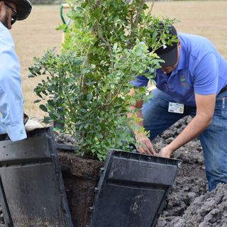 Texas Arbor Day Celebration at West Guth Park