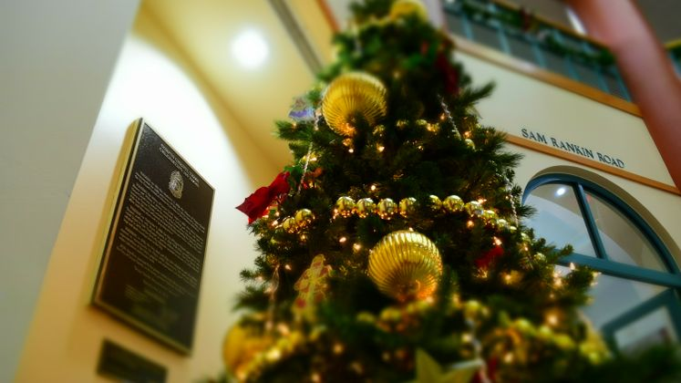 Christmas Tree is Up at City Hall