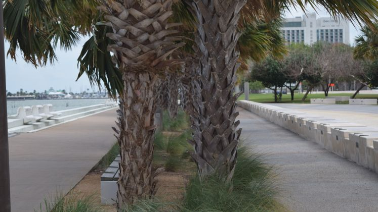 Bayfront Palm Trees