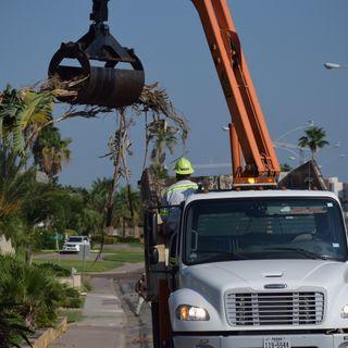 Harvey Debris Collection in Area 8 Begins Next Week