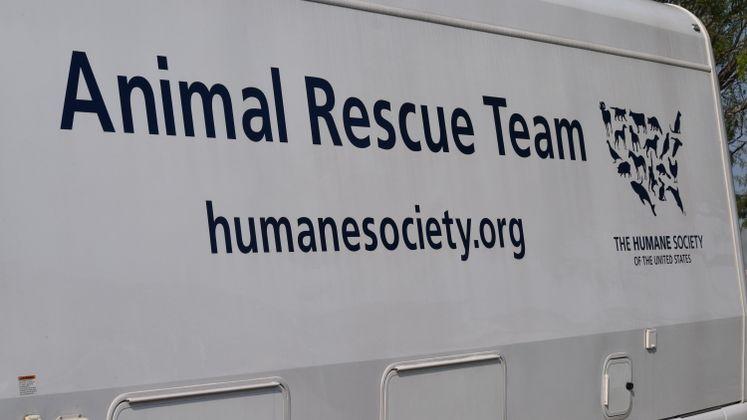 CCACS Harvey Rescues