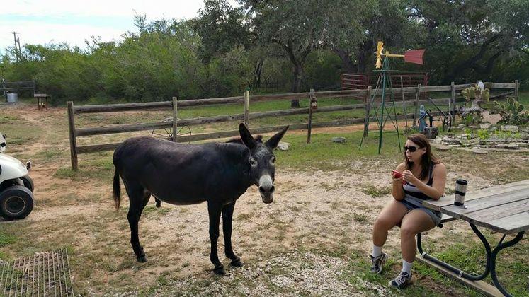M. Espitia & Donkey