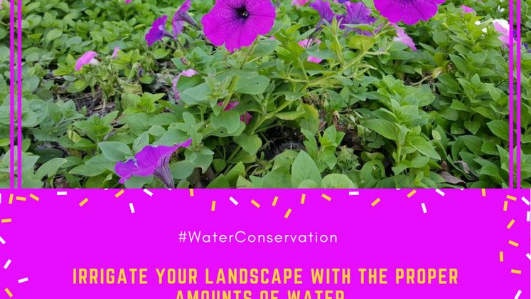 Xeriscape Irrigation