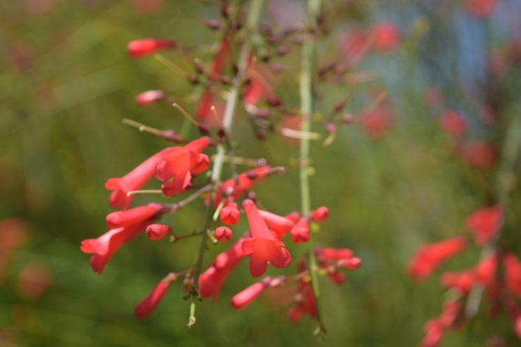 Flowers at Xeriscape Garden