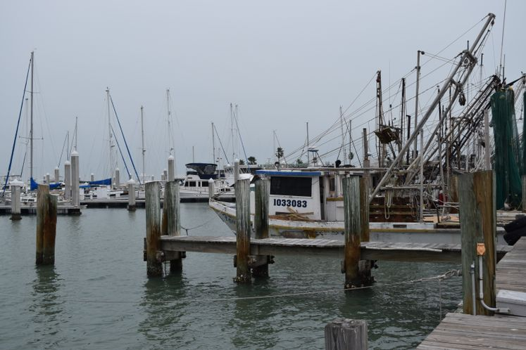 Shrimpers at Marina