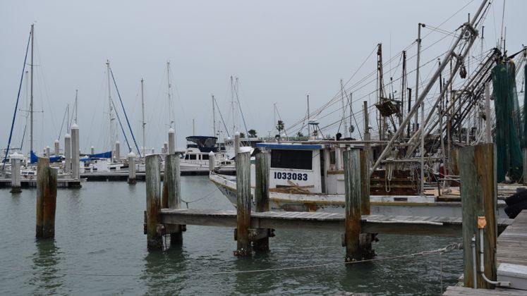 Shrimpers at Marina