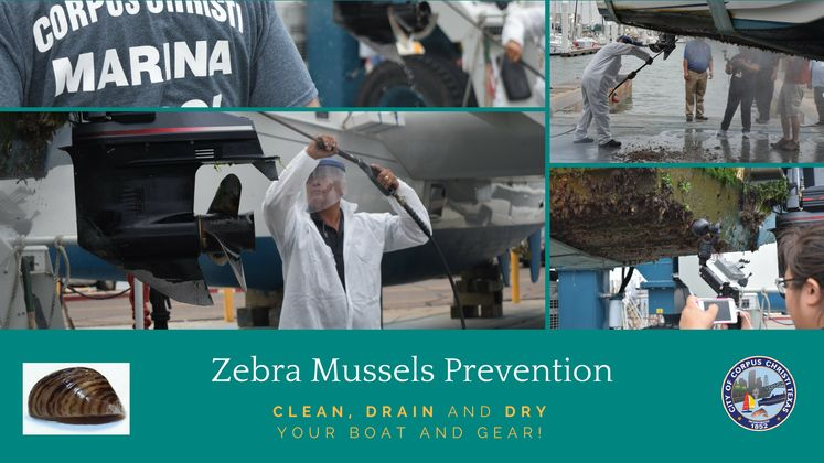 Zebra Mussels Prevention