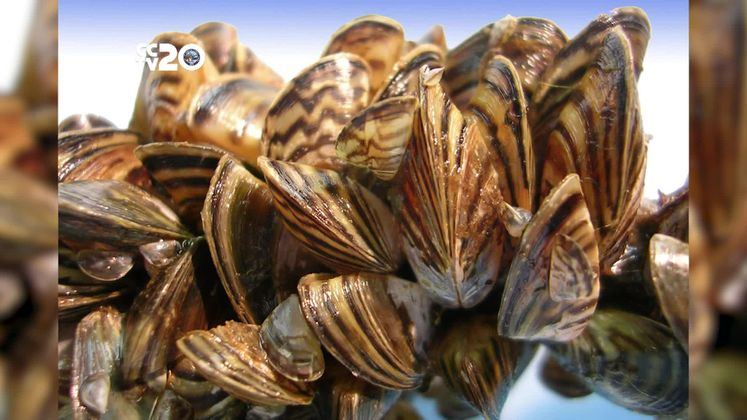 Avoid Zebra Mussels Clean, Drain and Dry your boat