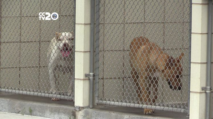 Adoption program helps pets get new homes
