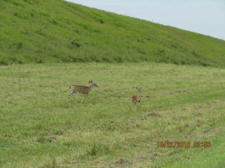 Wildlife at Choke Canyon Park