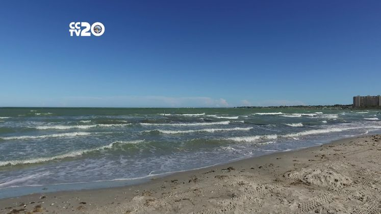 Tips to Handle a Rip Current