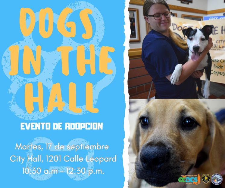 DOGS in the hall Spanish
