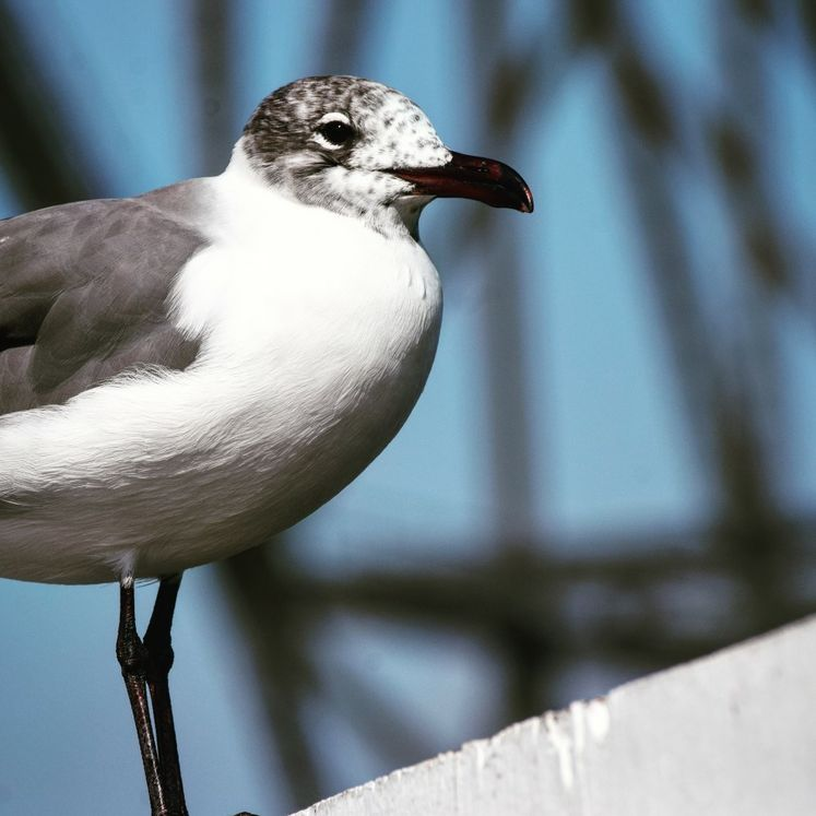 Seagull by the Bridge