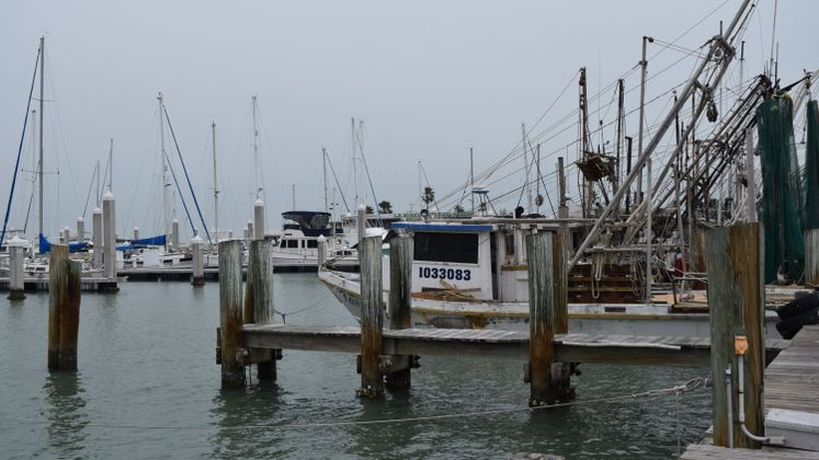 Shrimp Boats - CC Marina
