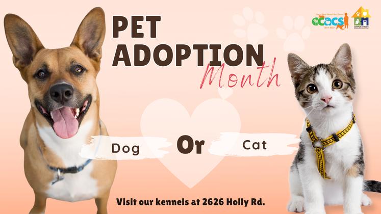 Pet adoption Month