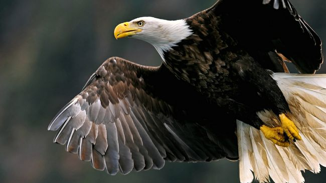 2017 Cayuga Station Eagle Viewing Day cancelled due to maintenance activities