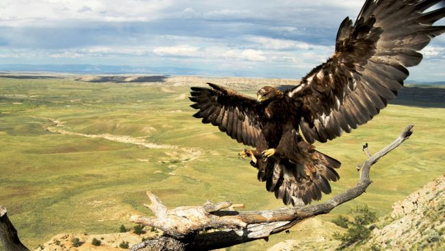 Center receives Duke Energy Foundation grant for golden eagle exhibition