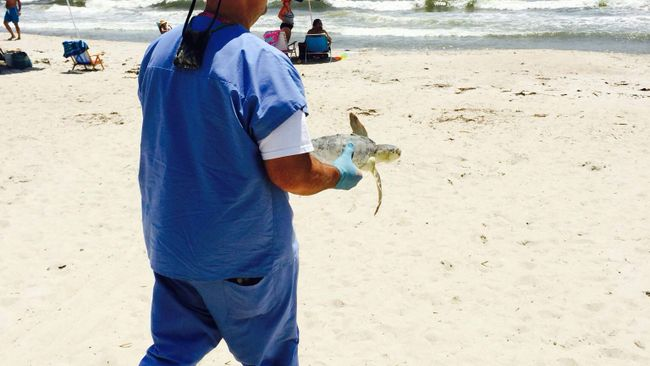 Turtle Release