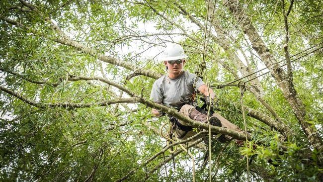 Duke Energy Florida named 'Tree Line USA' utility for 15th consecutive year