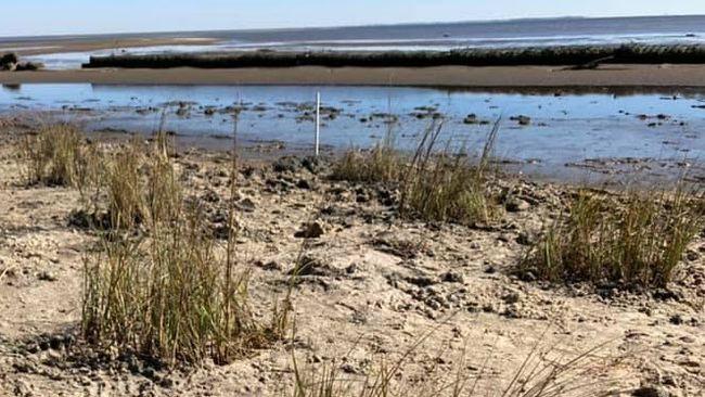 Florida Department of Environmental Protection completes initial revitalization of critical salt marsh habitat
