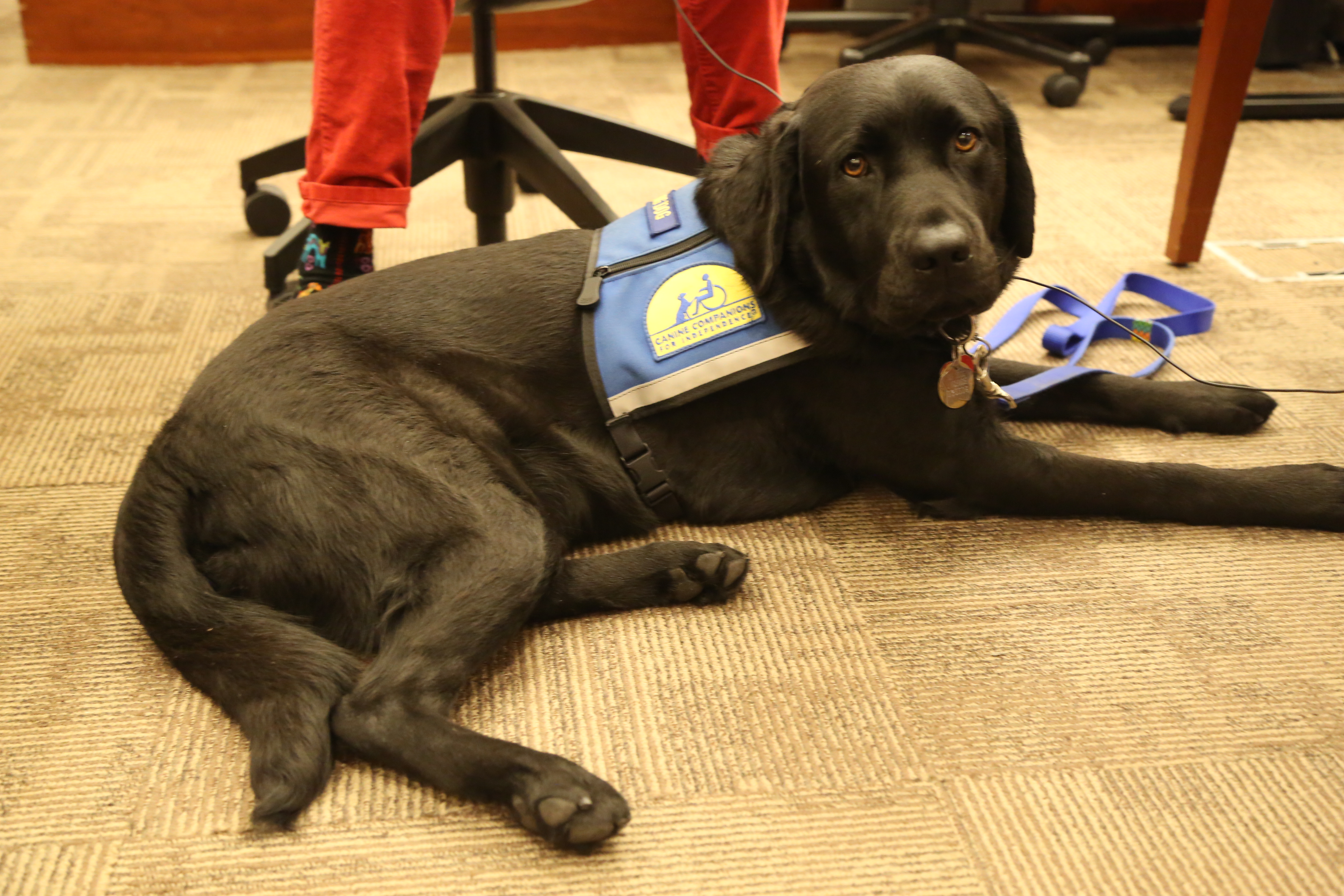 Court Gets Facility Dog to Help Children in Court