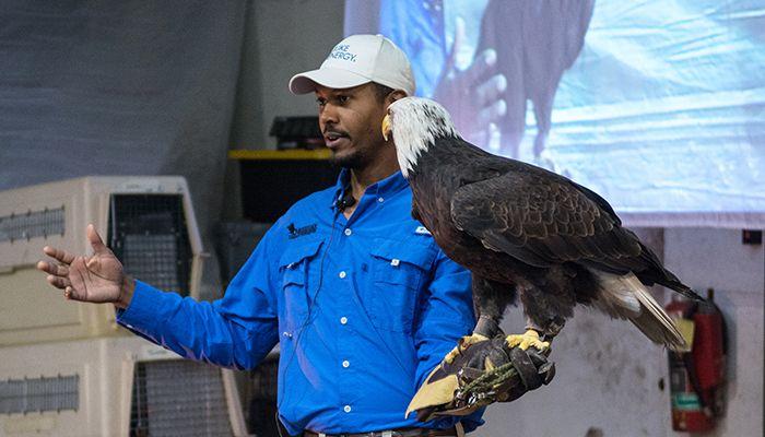 09-Eagle-PS