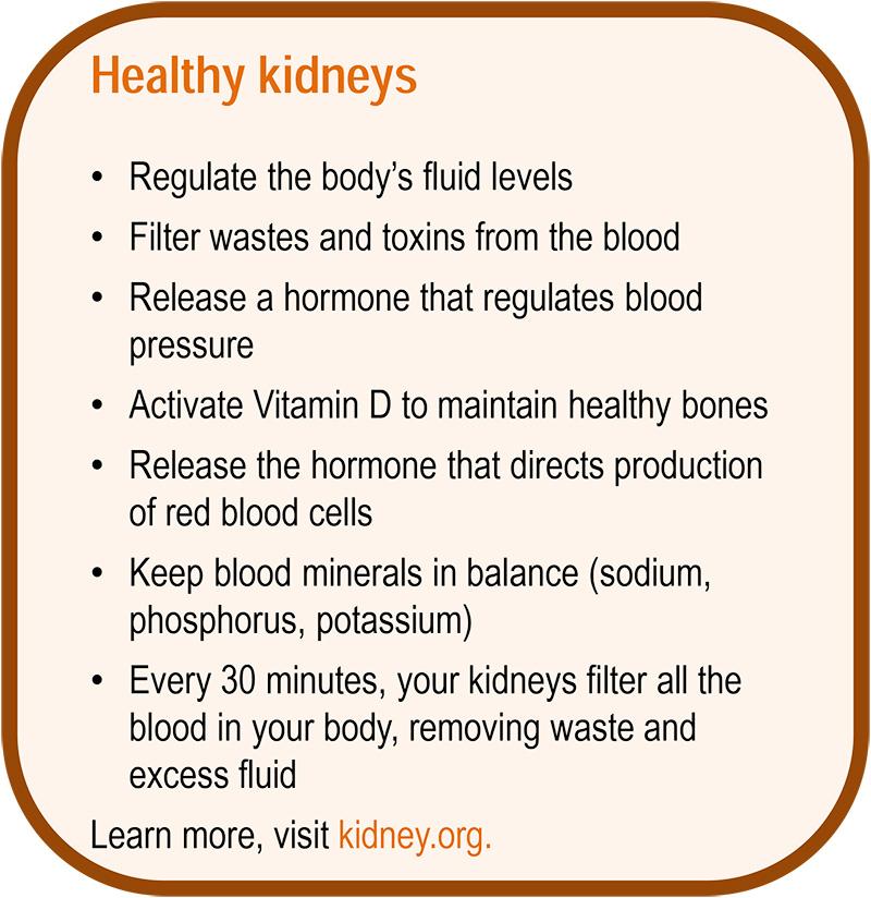 Kidney2-800