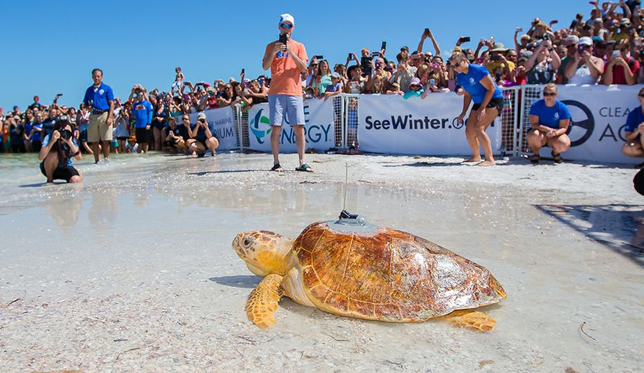 Video: Turtle makes waves in Florida