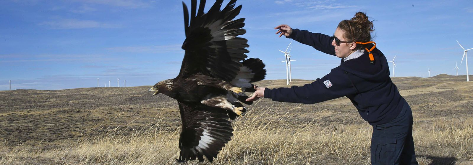 Wind farm tests technology to protect eagles