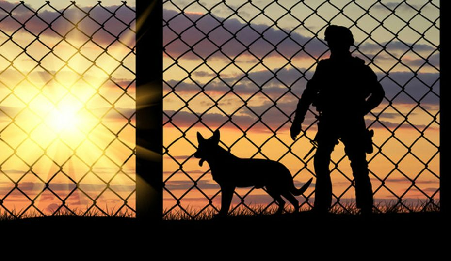 Saluting K9 veterans, the forgotten heroes