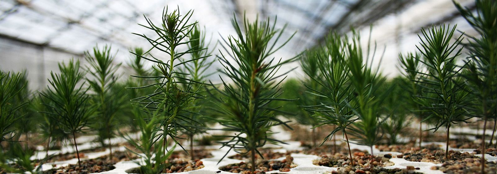 What you should know about successful tree planting