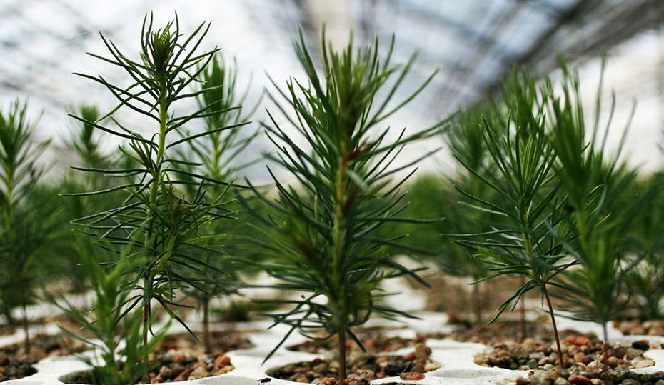 3 tips for successful tree planting