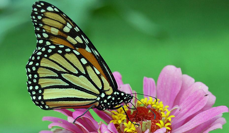 20171025 Oconee butterfly 4