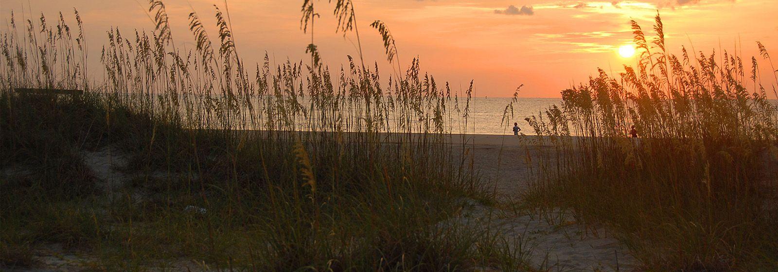 How sea oats make beautiful beaches possible