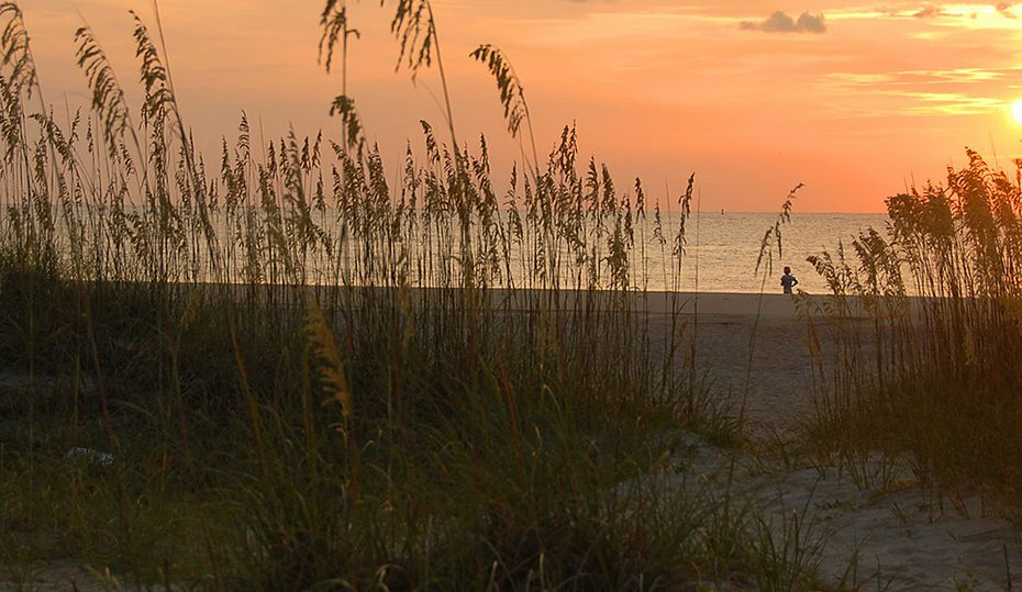 Sea oats make beautiful beaches possible