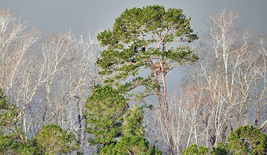 2019-0313-eagle-trees