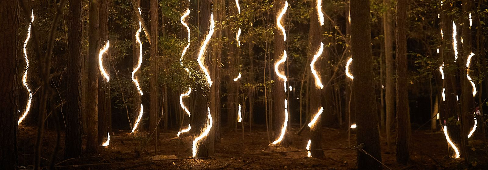 Walk through a forest of light at the U.S. National Whitewater Center