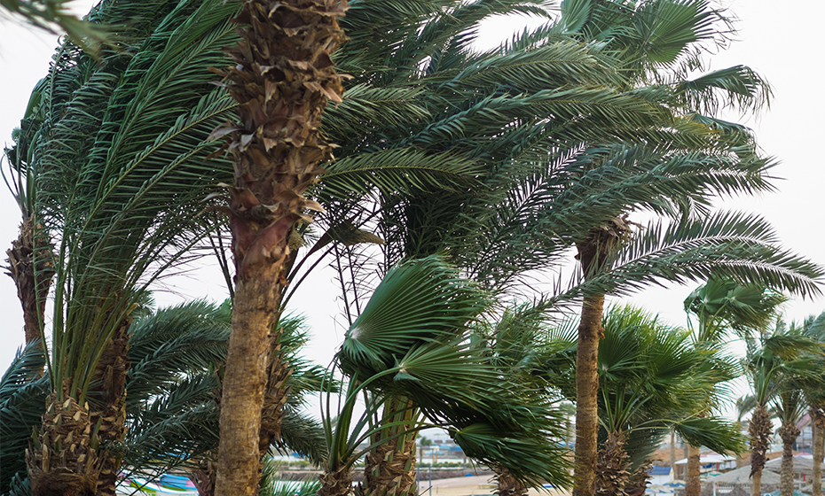2020-0526-hurricane-prep-trees