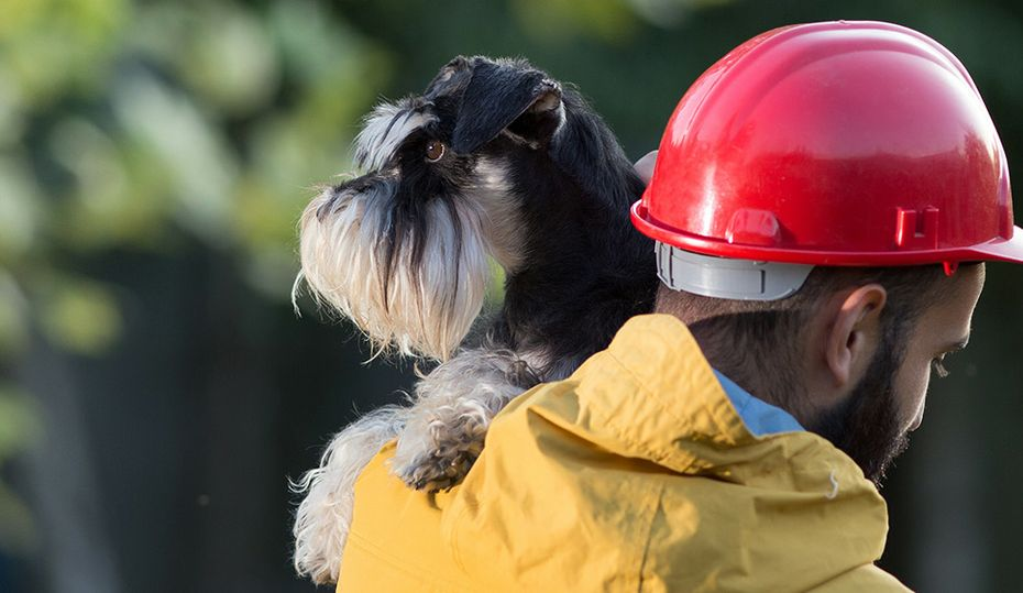 Simple emergency preparedness plans for your pets