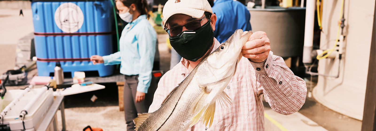 Snook are moving north, and scientists want to know why