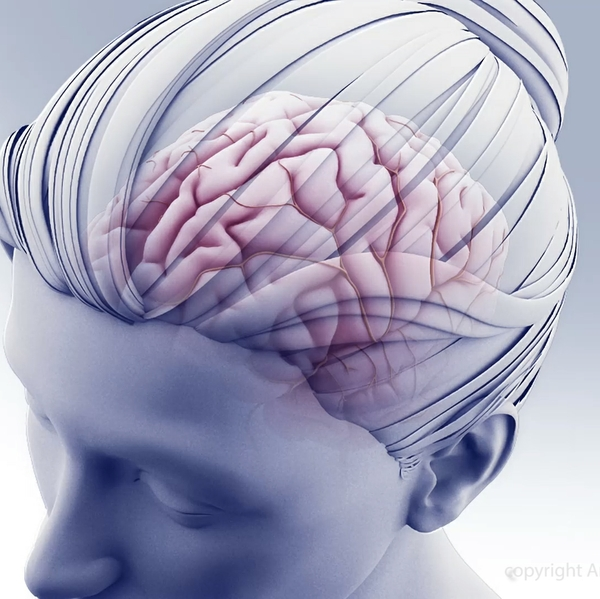 Head+and+brain+illustration