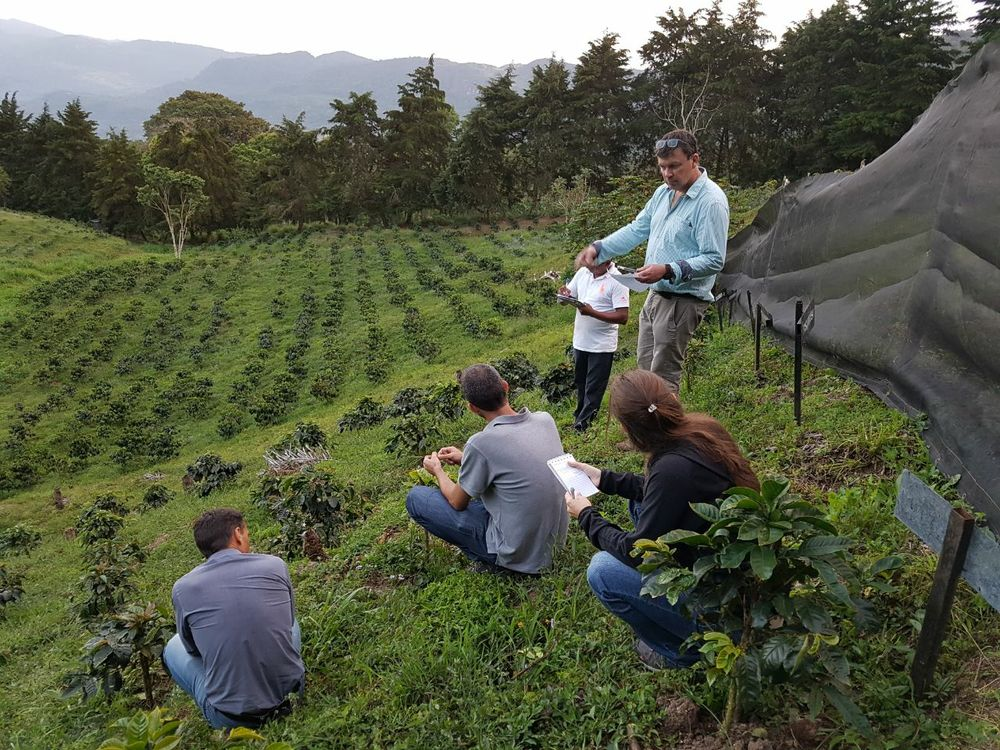 Dunkin' and National DCP Announce Significant Strategic Initiative to Boost Coffee Sustainability