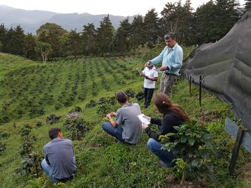group of scientists in coffee field 002