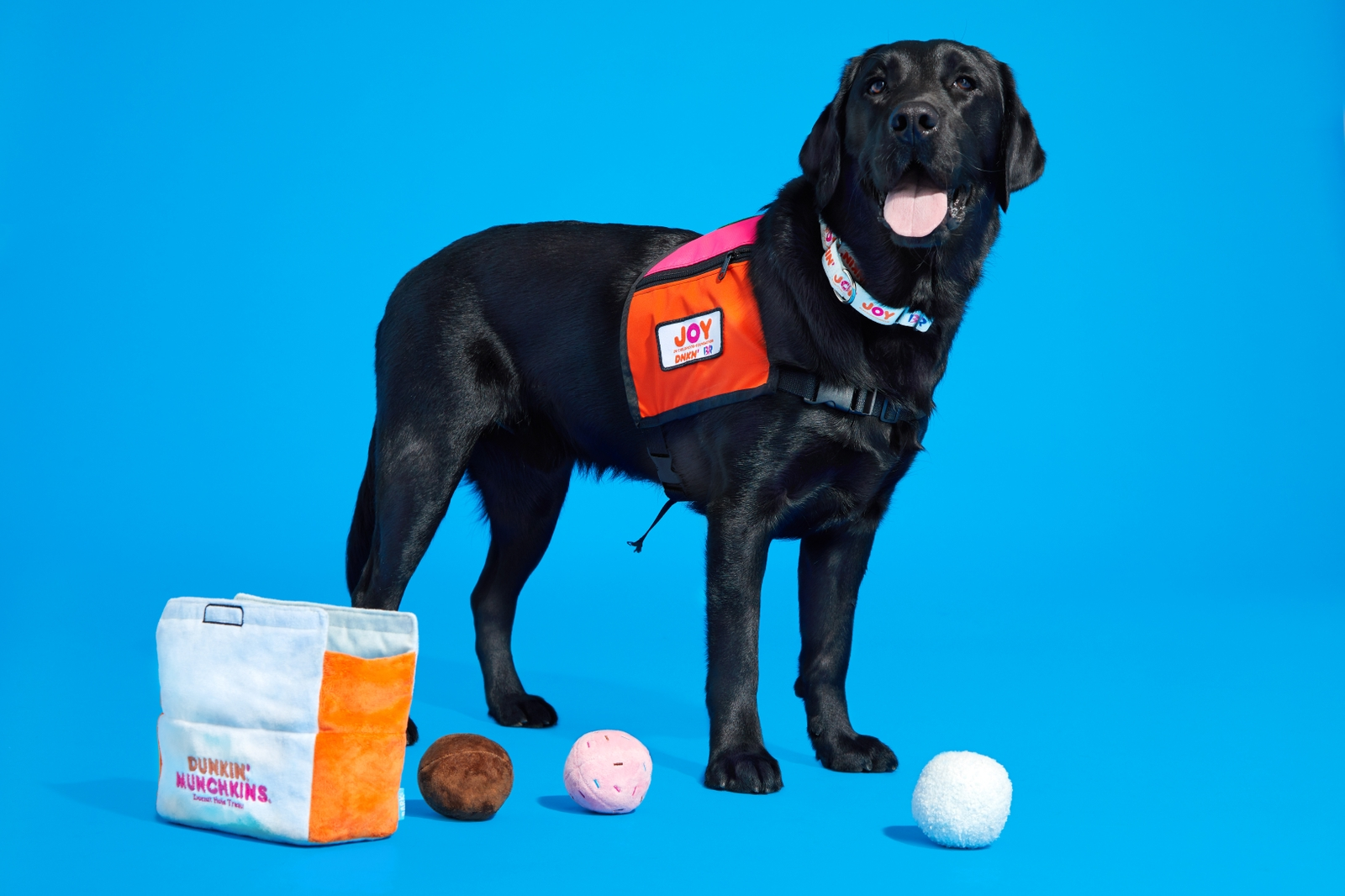 Dogs Can Now Run on Dunkin' Too: Dunkin' and BARK Introduce  New Dog Toys for a Cause